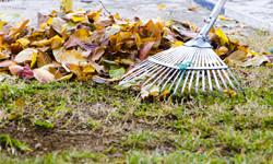 A piture of a rake, raking up some leaves.