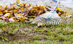 A piture of a rake, raking up some leaves.